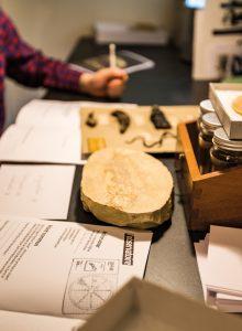 Atelier Octopus - musée des Confluences, Lyon - 2017